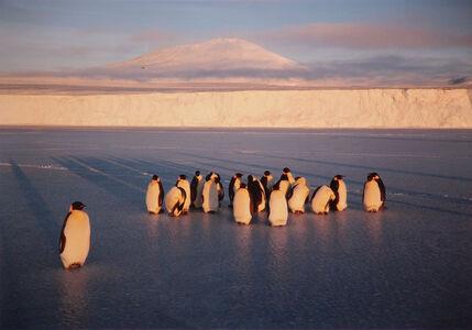 Jody Forster, 'Emperor Penguins, Mt. Erebus and the Barne Glacier', 1992