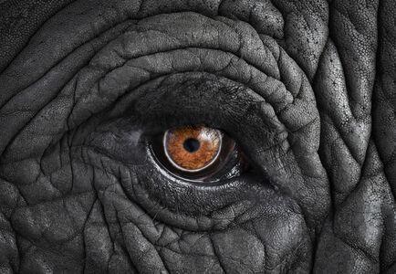 Brad Wilson, 'African Elephant #11, Monterey, CA', 2010