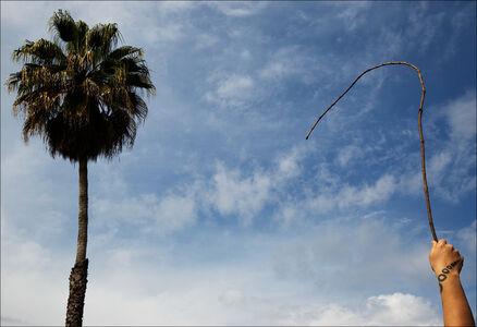 Oli Rodriguez, 'A Familiar Panting: Palm Whip', 2019