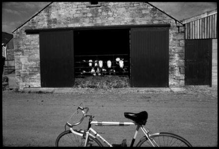 Ian Hoskin, 'Cows at Farley's Farm', ca. 1980
