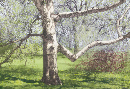 Maria Muller, 'Birch with Red-Branched Bush'