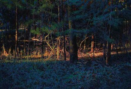 Greg Mort, 'Forest Light'