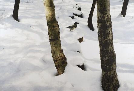 Abbas Kiarostami, 'Trees and Crows', 2008