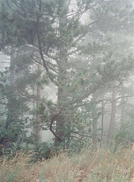 Simone Nieweg, 'Misty Pine Tree, Vaucluse', 2012
