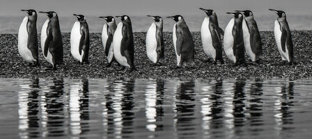 David Yarrow, 'Oceans 11', 2018