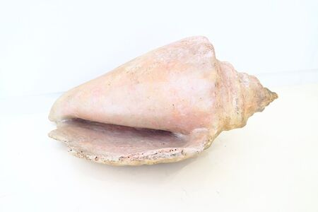 Ming Fay 費明杰, 'Pink Conch', 1984