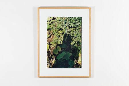Michel Campeau, 'Arborescence 1 (Série de l'Ombre de soi)', 2000-2001