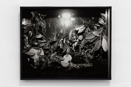 Joanna Piotrowska, 'Enclosure XL', 2019