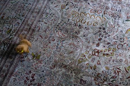 Christian Vogt, 'Electric Dog', 2011