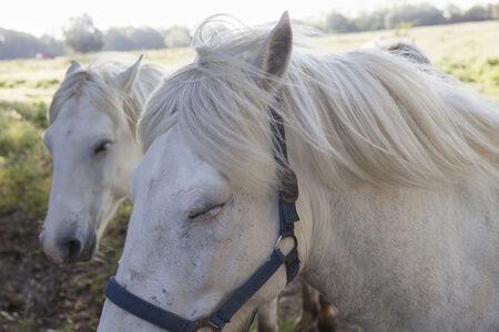Rachel Cobb, 'Horses in a Mistral 2/10'