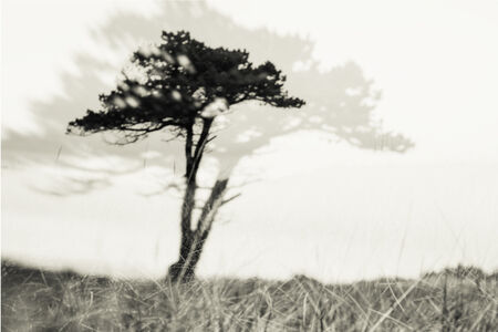 Caroline Fraser, 'Highland Memories: Lone Pine', 2016