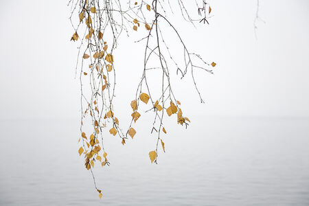 Laurie Lambrecht, 'Lake Trees 24', 2006