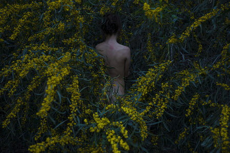 Itamar Freed, 'Golden Wreath Wattle', 2015