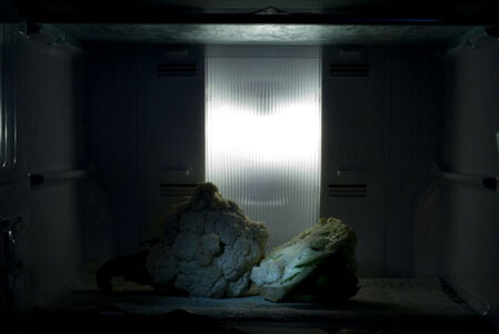 Prajakta Potnis, 'Still life', 2009