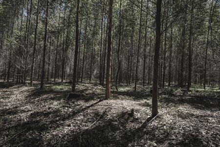 Santu Mofokeng, 'Piet Retief plantation, where a gravesite used to be', 2012