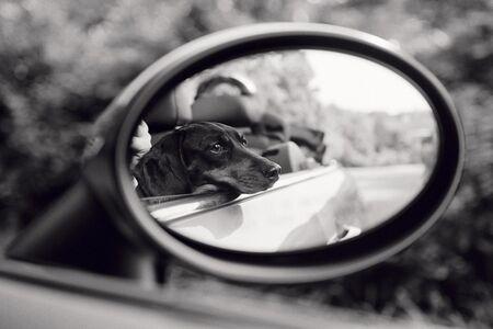 Priscilla Rattazzi, 'Lola, Rear View Mirror, East Hampton', 2007