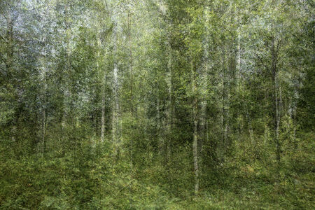 Kim Boske, 'When I grow up I want to be a forester #4', 2019
