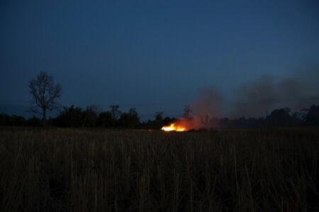 Apichatpong Weerasethakul, 'The Field', 2009