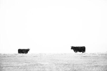 Tuck Fauntleroy, 'Winter Stock III, edition 1/12', 2011-2020