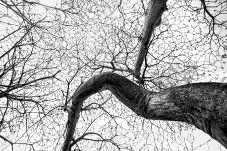Zoe Zapot, 'My Tree V'