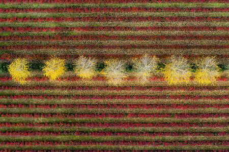 Kacper Kowalski, 'Seasons/Autumn #10 '