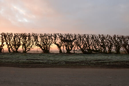 Andy Goldsworthy, 'Hedge crawl dawn frost cold hands Sinderby, England 4 March 2014', 2014