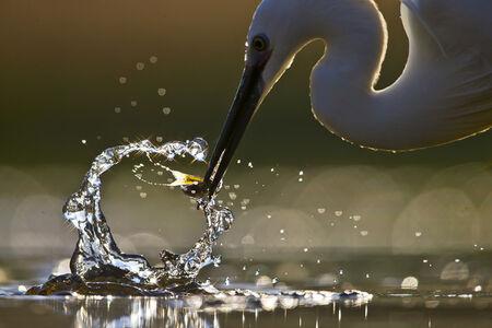 Maitham Almisry, 'Water Sculpture'