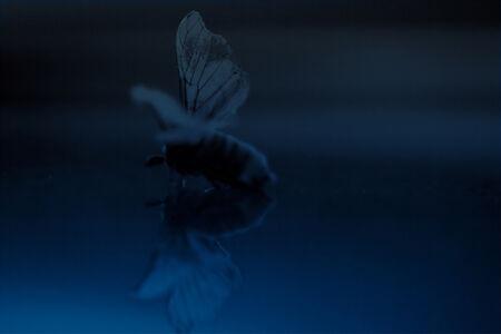 Shoufay Derz, 'In widening circles (after Rilke) 1', 2011