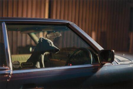 Martin Usborne, 'Untitled (Car Dog)', 2016