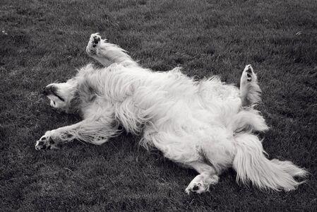 Priscilla Rattazzi, 'Luna on the Lawn, East Hampton', 2008