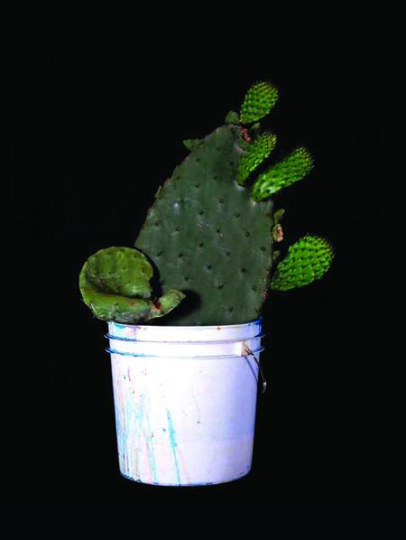 Mario Ybarra. Jr., 'Cactus', 2011