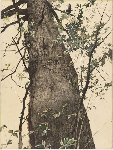 Andrew Wyeth, 'The Oak', 1944