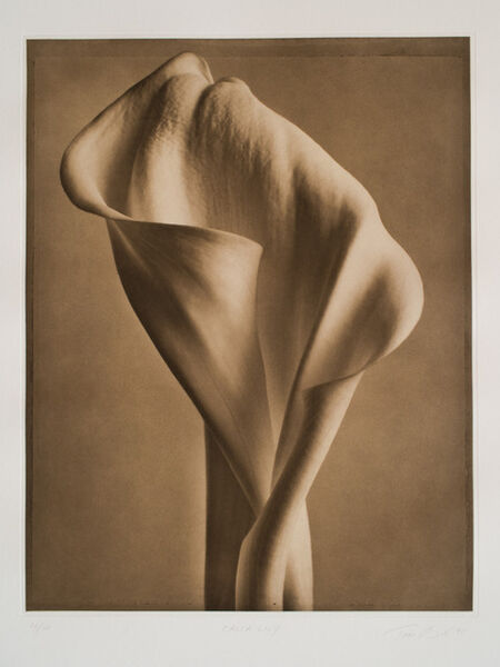 Tom Baril, 'Calla lilly', 1998