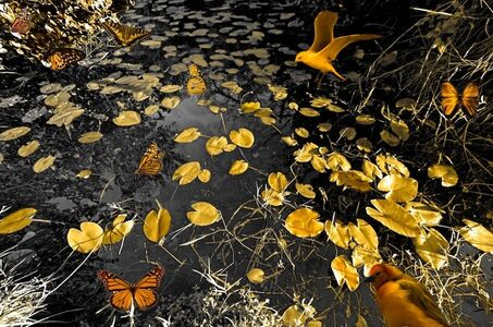 Isack Kousnsky, 'BW Golden Marsh with Butterflies ', 2013