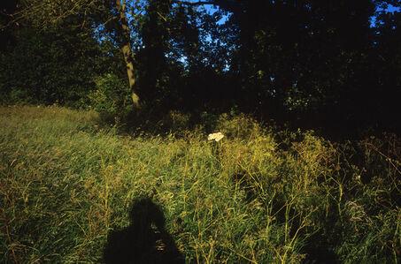 Justin Partyka, 'Shadow, Cowpasture Lane, Suffolk', 2014