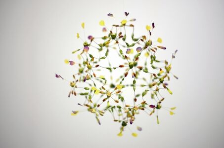 Hiroshi Shinno, 'Cluster of Life, 2013.9.17', 2013