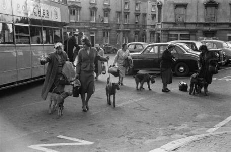 David Farrell, 'London Dog Show', 1956