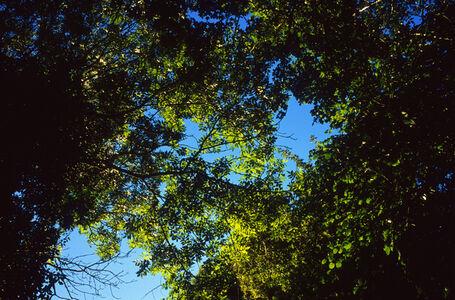 Justin Partyka, 'Treetops, Cowpasture Lane, Suffolk', 2014