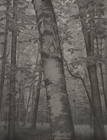 Mary Reilly, 'Within the Forest', 2018