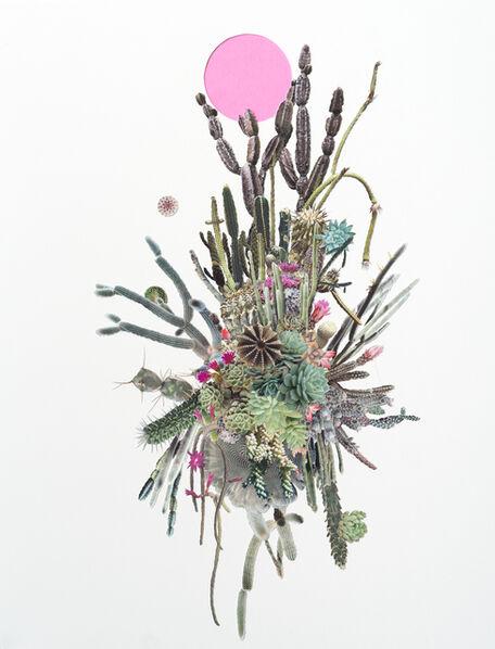 Stephen Eichhorn, 'Cactus Cluster/ Pink Circle (Study)', 2017
