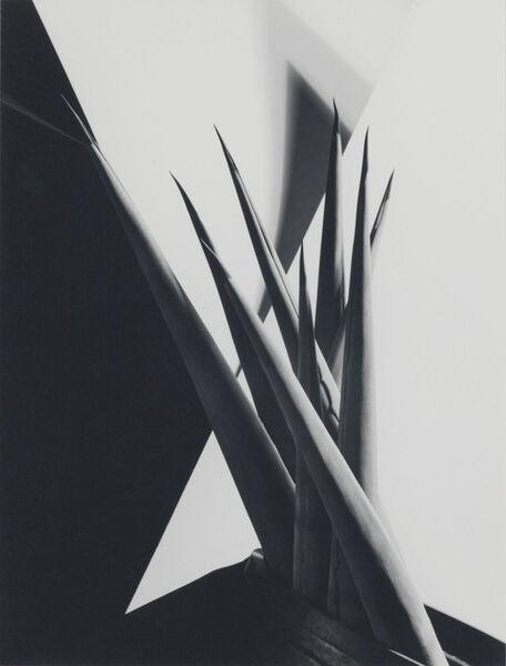 Imogen Cunningham, 'Agave Design I', 1920s