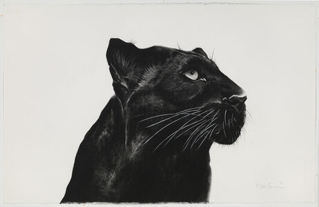 Rose Corcoran, 'Black Panther Looking Away'
