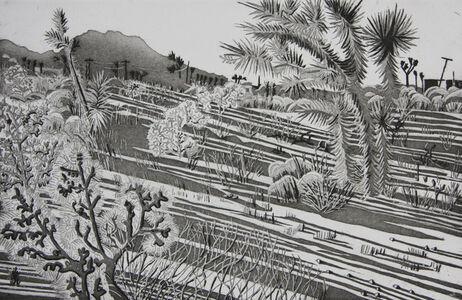 Kate Crook, 'Joshua Tree #5', 2017