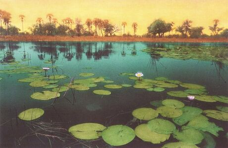 Maria Muller, 'Water Lilies, Orange Sky', 2000