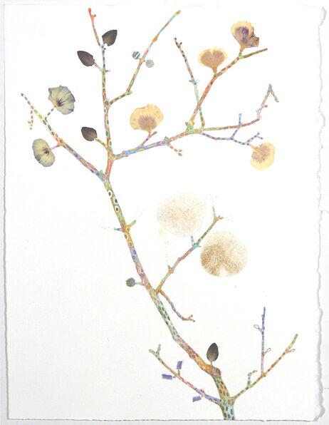 Marilla Palmer, 'Pattern and Petal ', 2016