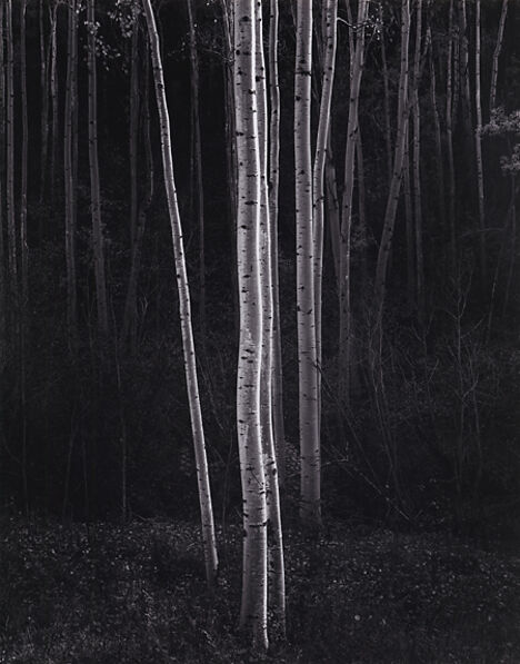 Ansel Adams, 'Aspens, Northern New Mexico', 1958