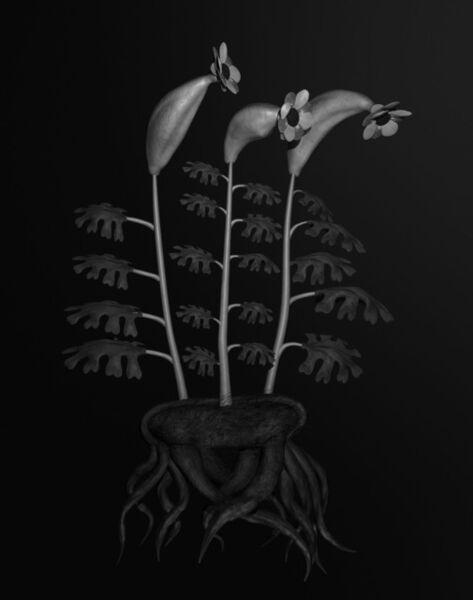 Miljohn Ruperto & Ulrik Heltoft, 'Voynich Botanical Studies, Specimen #55r Leto', 2013