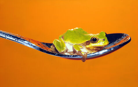 Young-Sung Kim, 'Nothing.Life.Object (Frog on Spoon)', 2015