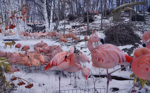 Lisa Frank, 'Flamingo Tableau', 2014