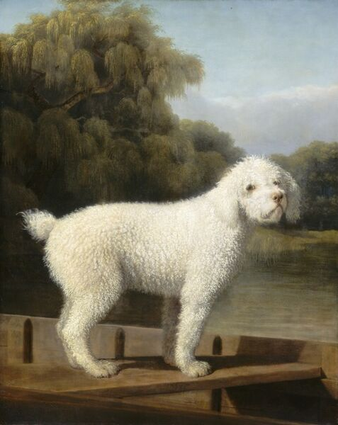 George Stubbs, 'White Poodle in a Punt', ca. 1780